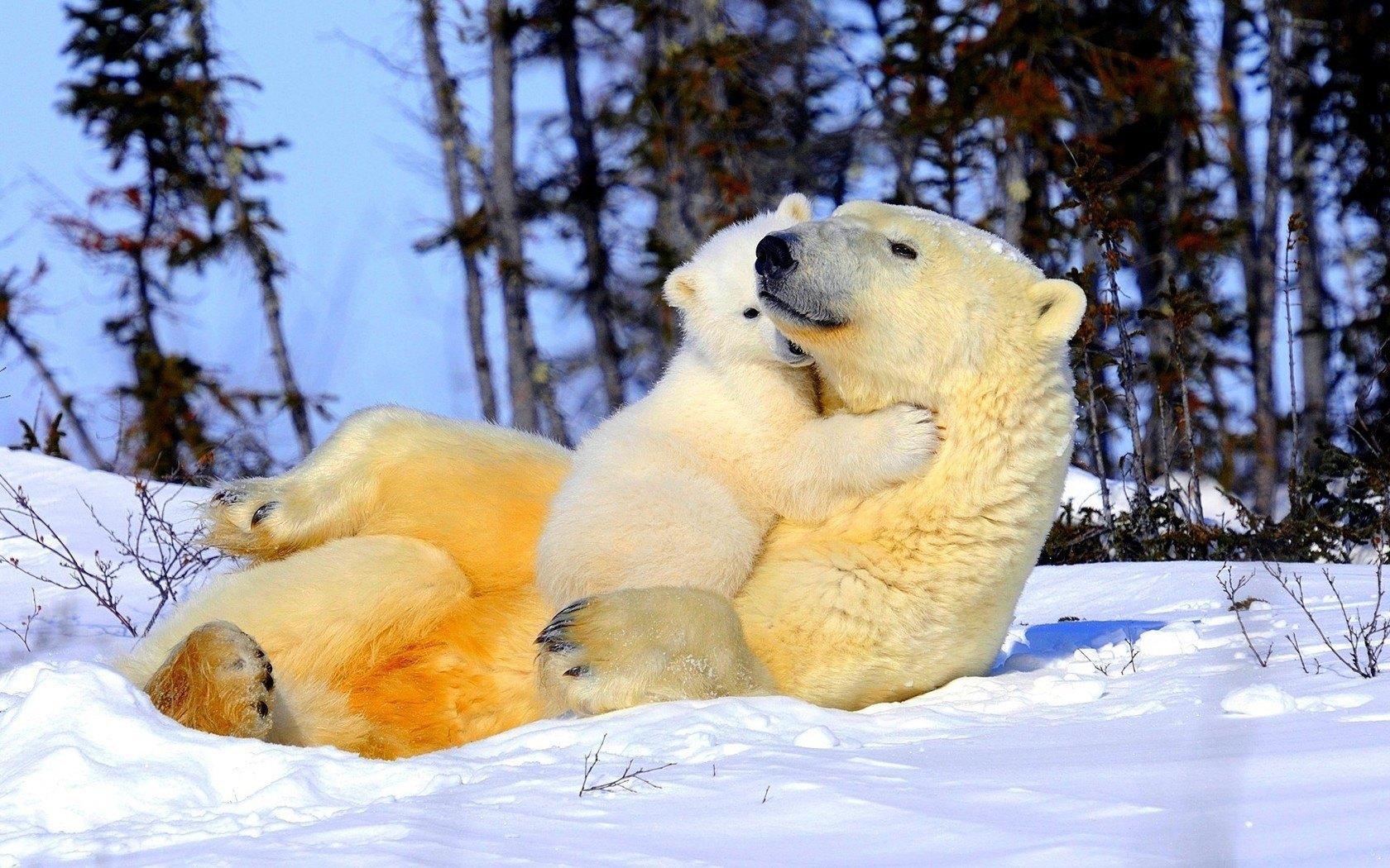 abrazo_polar-1680x1050